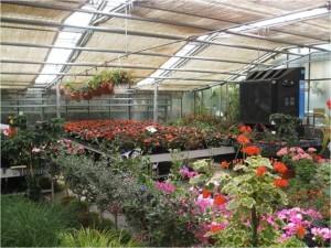 climatizacion_verano_refrigeración_ganaderia_en_verano_jardineria_calor_aire_acondicionado_exterior_ (3)